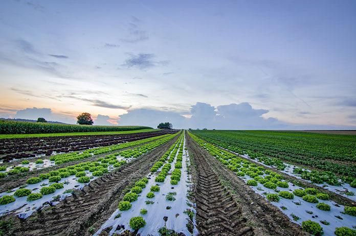 Gdzie szukać informacji o imprezach z branży rolniczej?